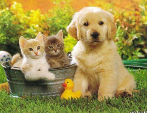 ¿Se puede viajar con mascotas a Corea del Sur?